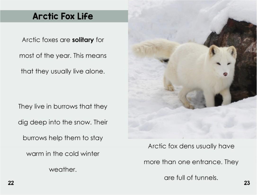 Arcticfoxesinterior