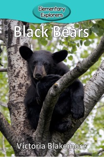 Black Bears- Reader_Page_01