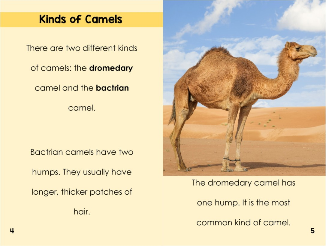 Camelsinterior