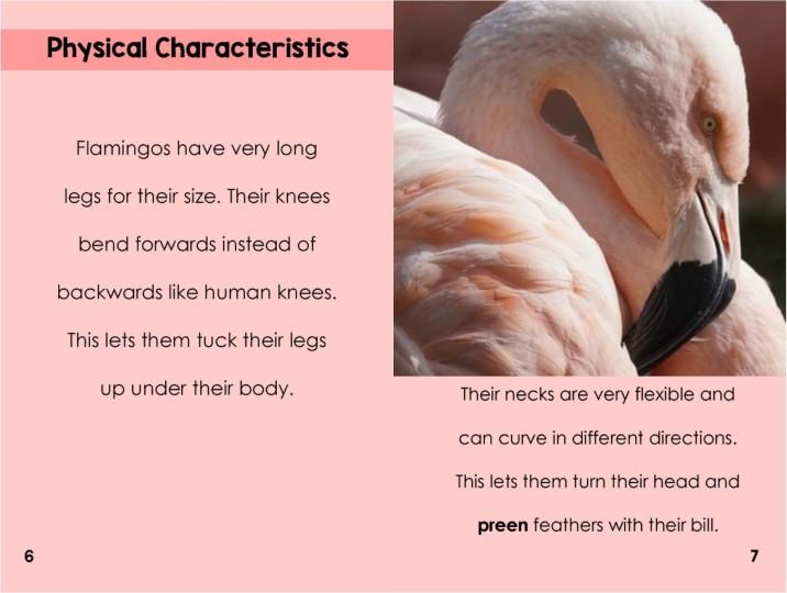 Flamingosinterior