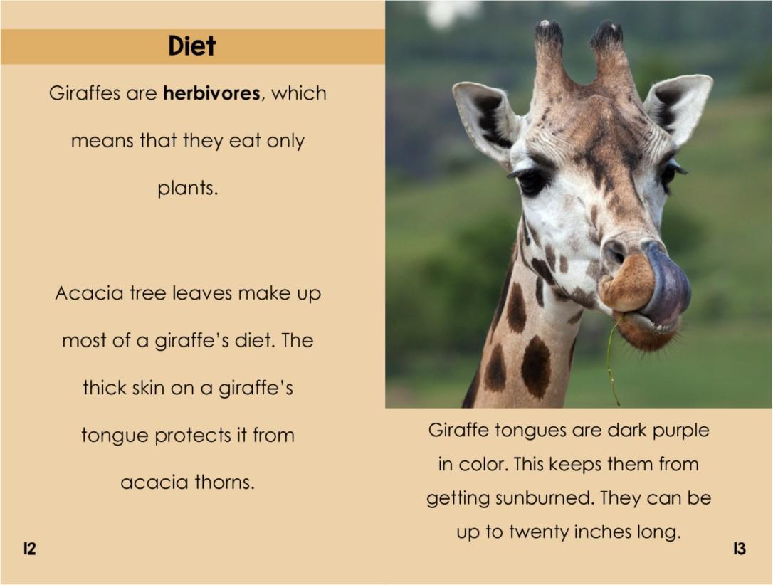 Giraffesinterior