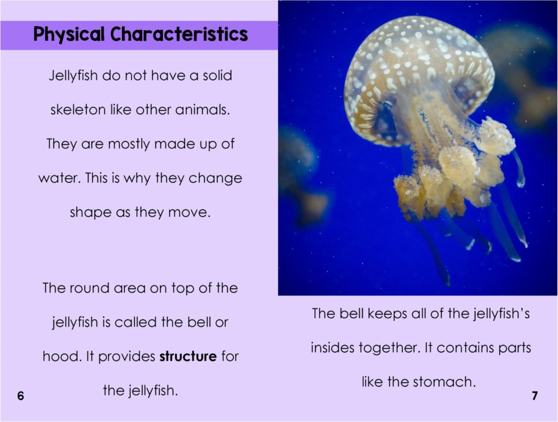 Jellyfishinterior