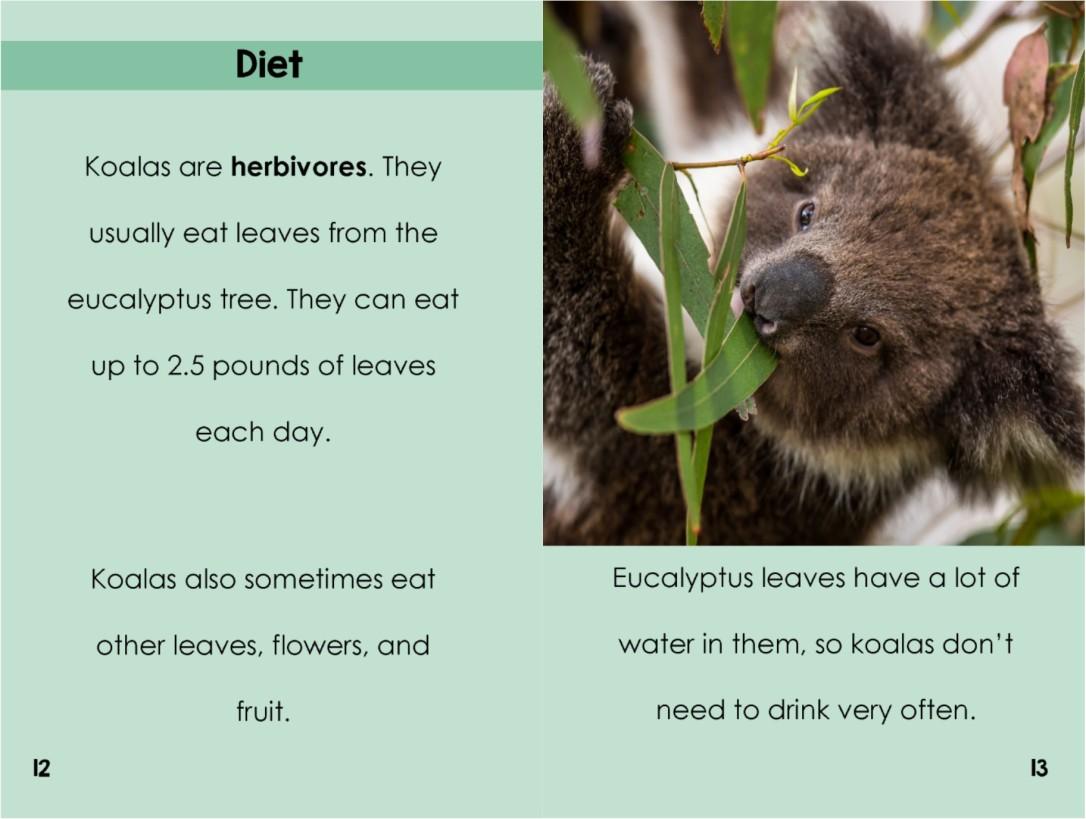 Koalasinterior
