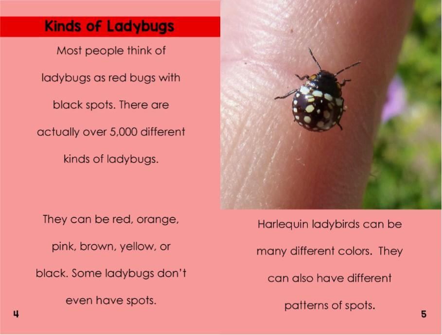 Ladybugsinterior