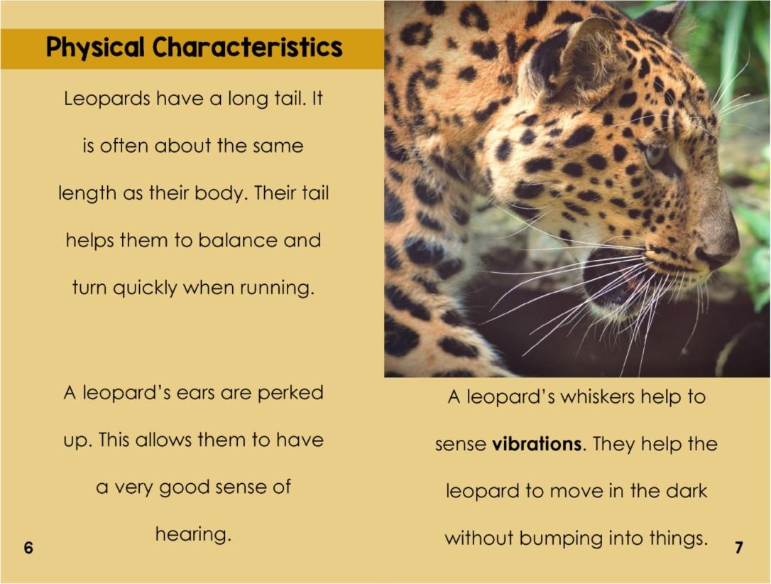 Leopardsinterior