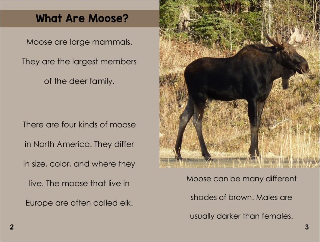 Mooseinterior