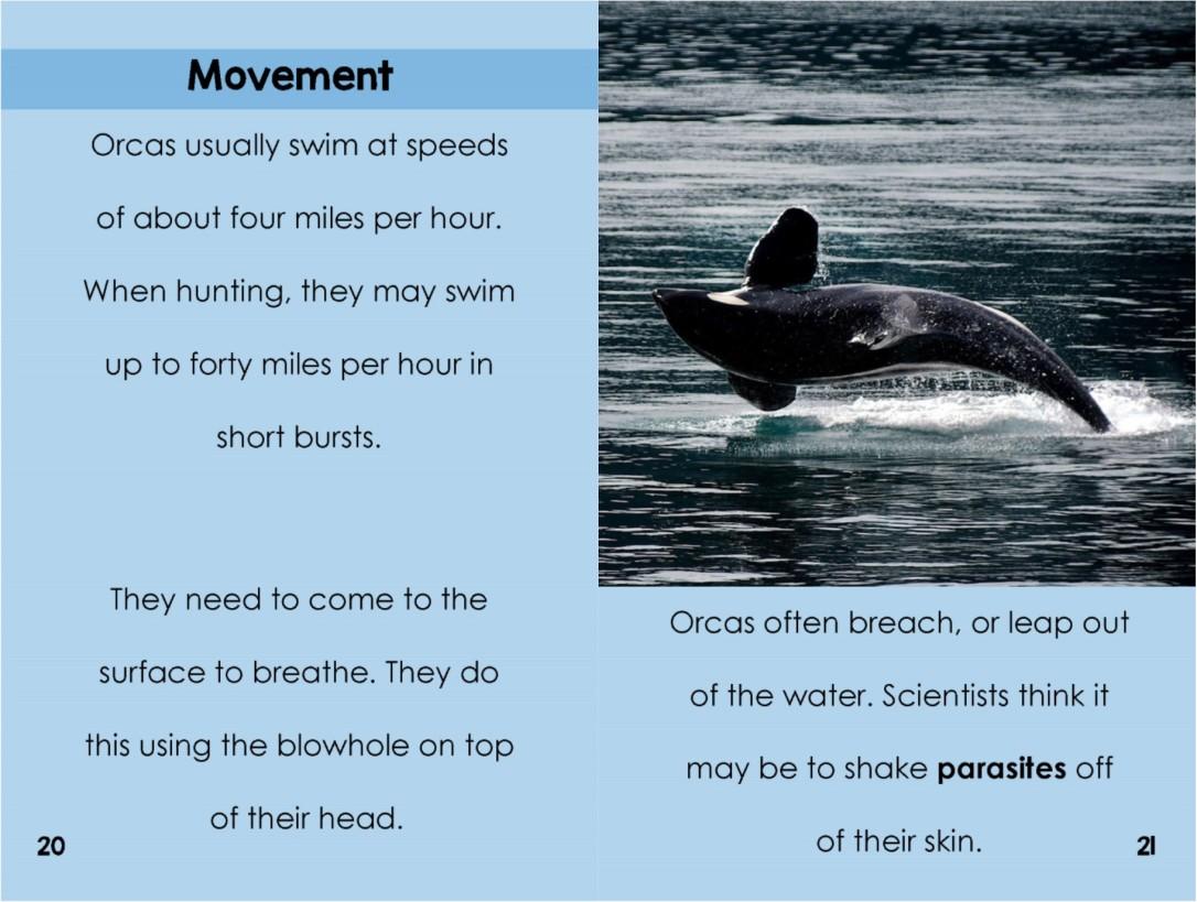 Orcasinterior