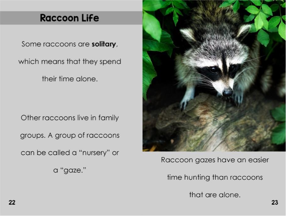 Raccoonsinterior