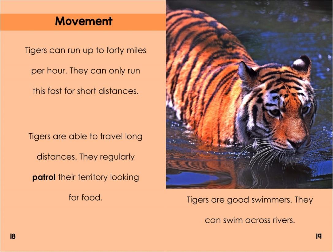 Tigersinterior