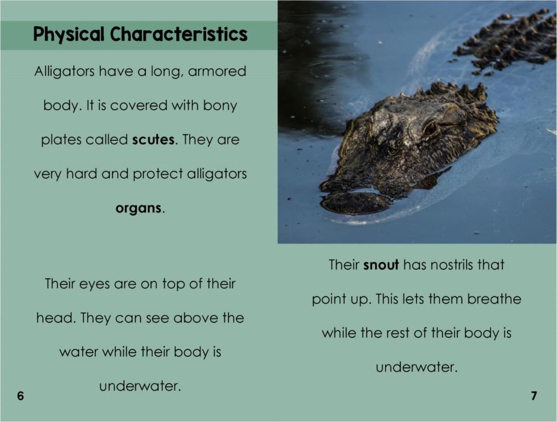 Alligatorsinterior