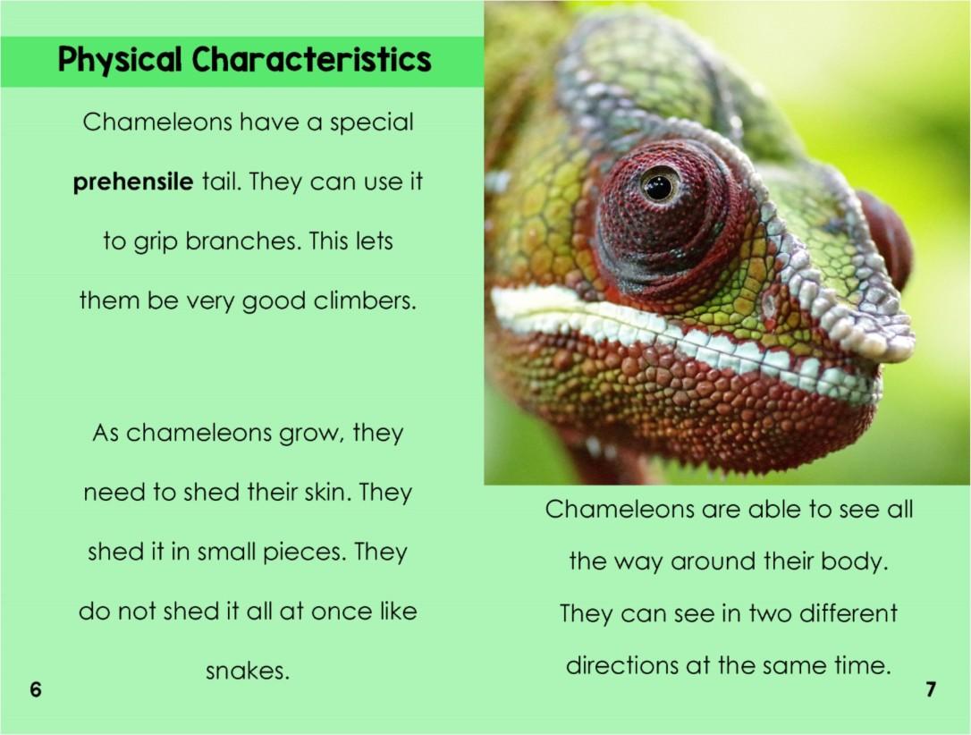 Chameleonsinterior