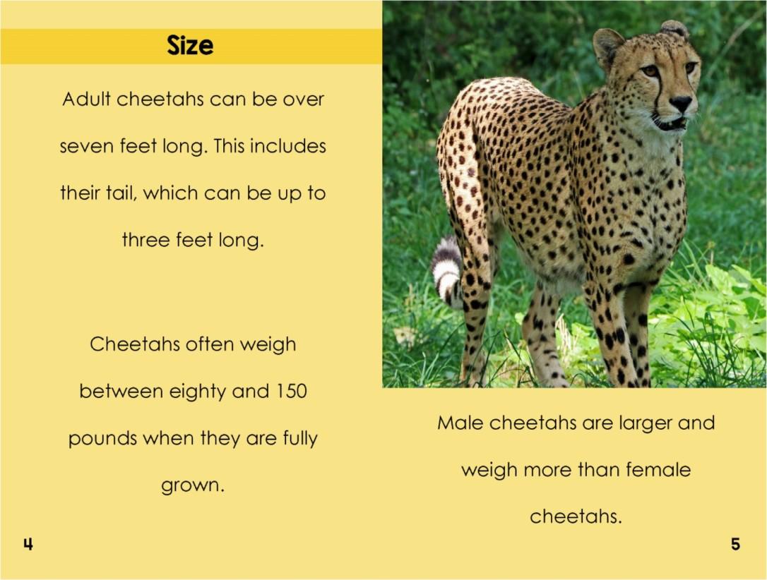 Cheetahsinterior