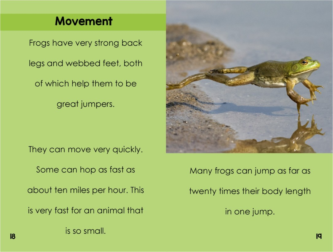 Frogsinterior