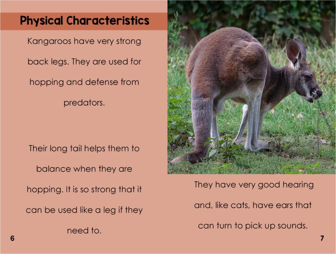 Kangaroosinterior