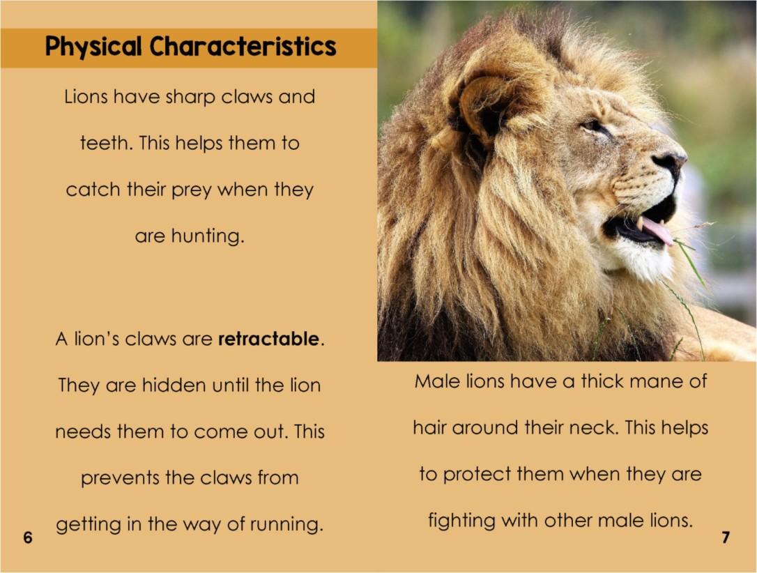 Lionsinterior