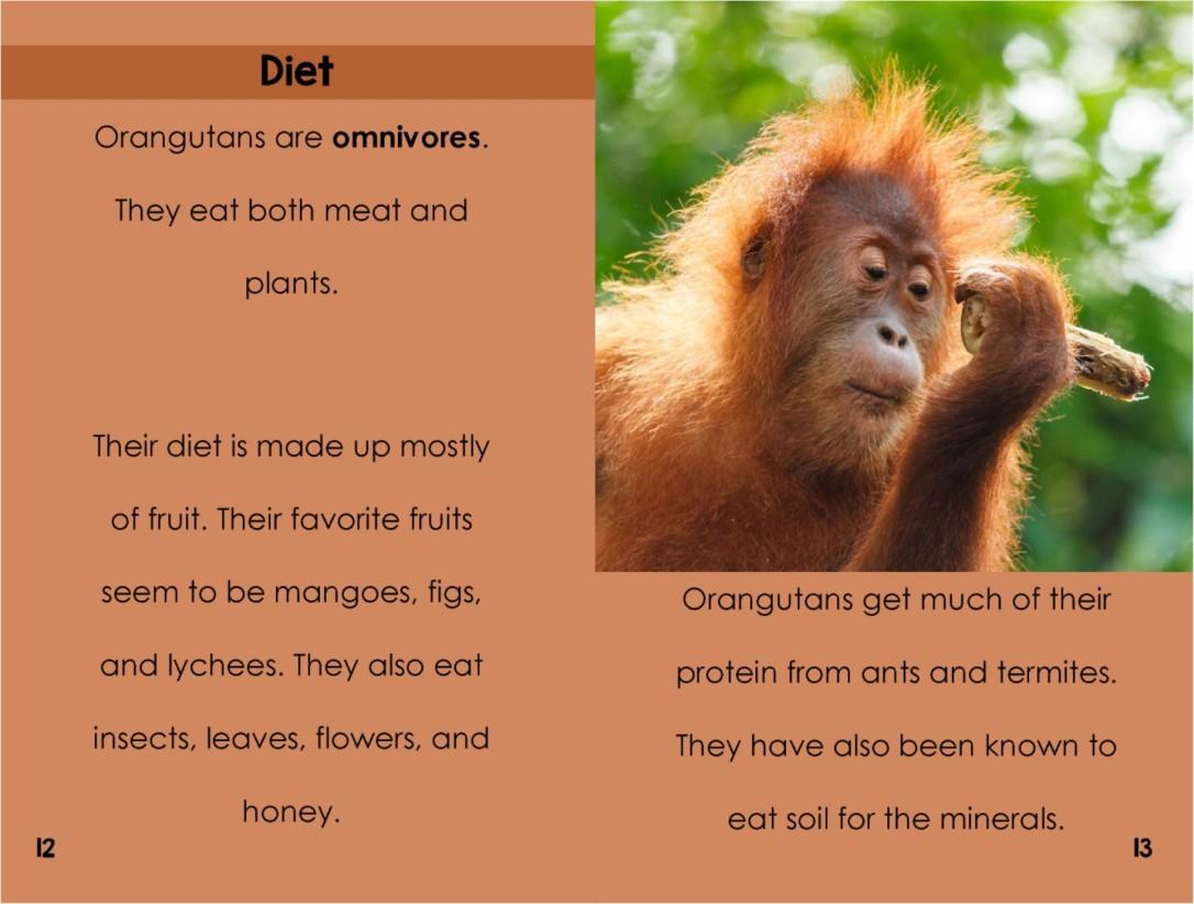 Orangutansinterior