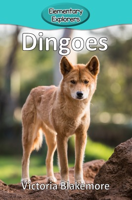 Dingoes- Reader_Page_1