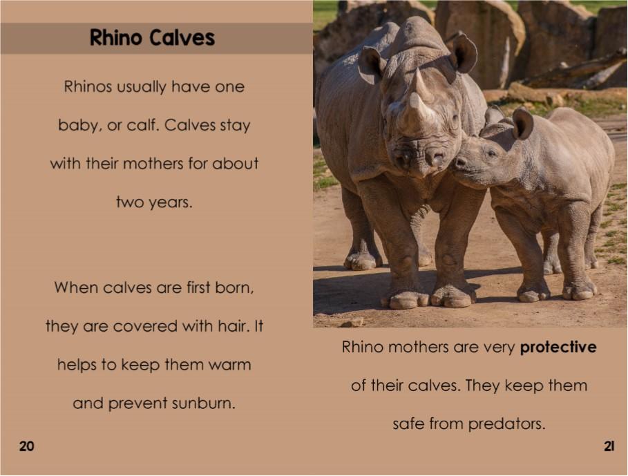 Rhinos interior