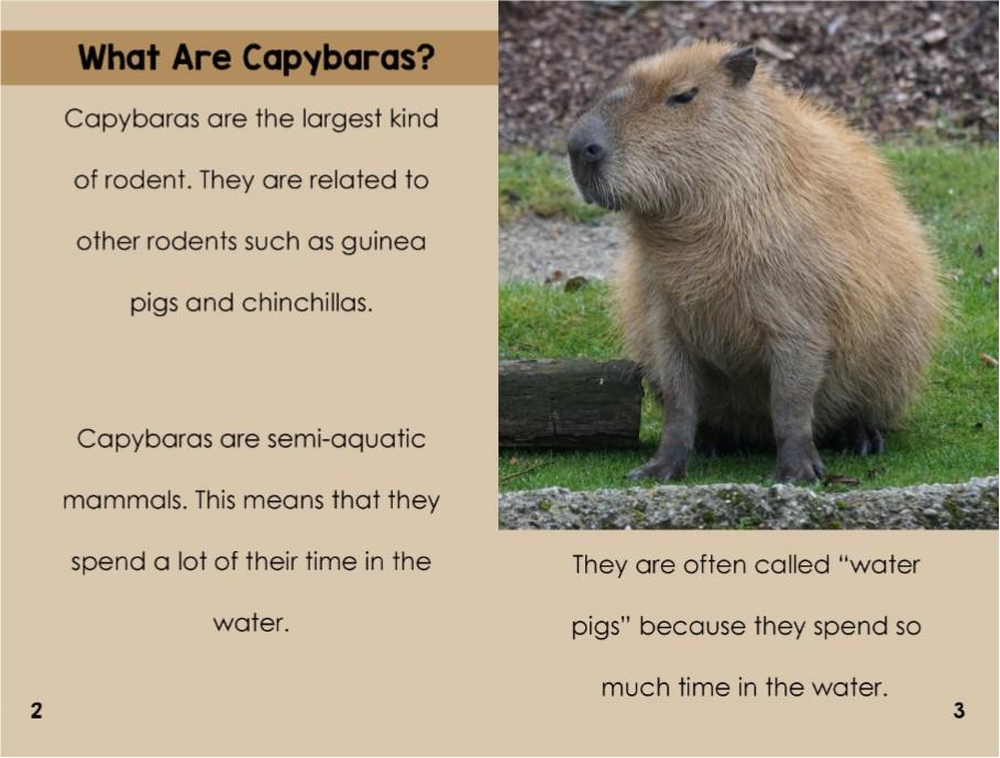 Capybarasinterior