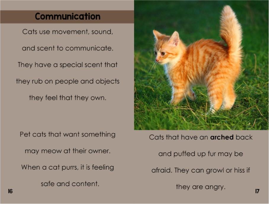 Catsinterior