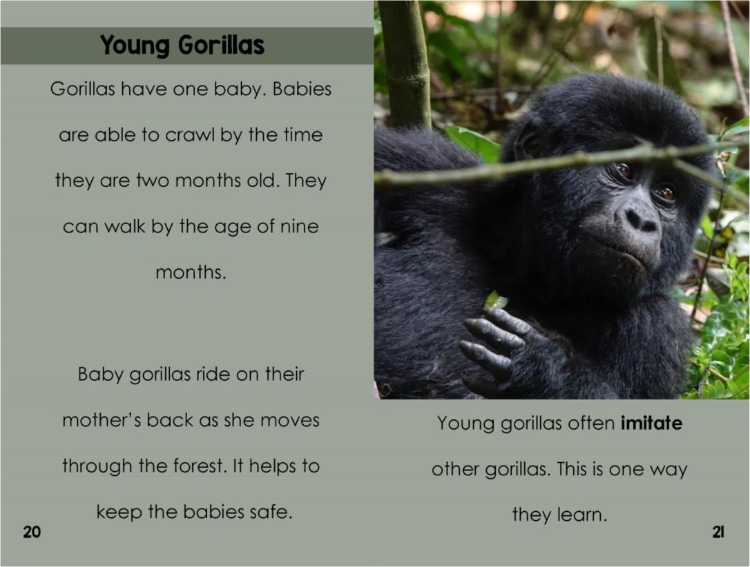 Gorillasinterior