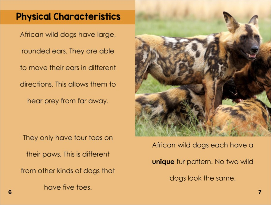 African Wild Dogs interior