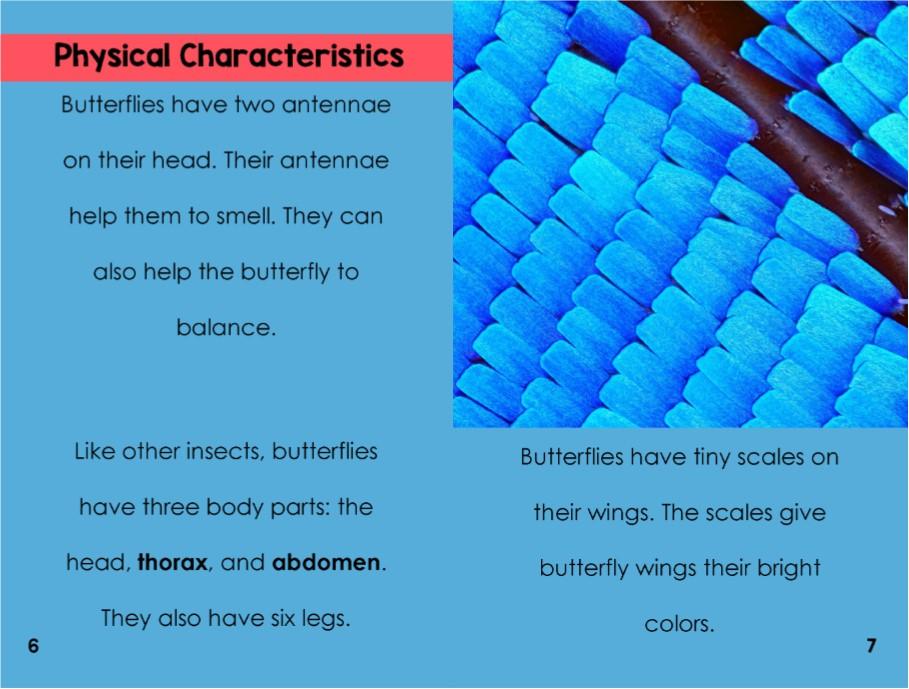 Butterfliesinterior