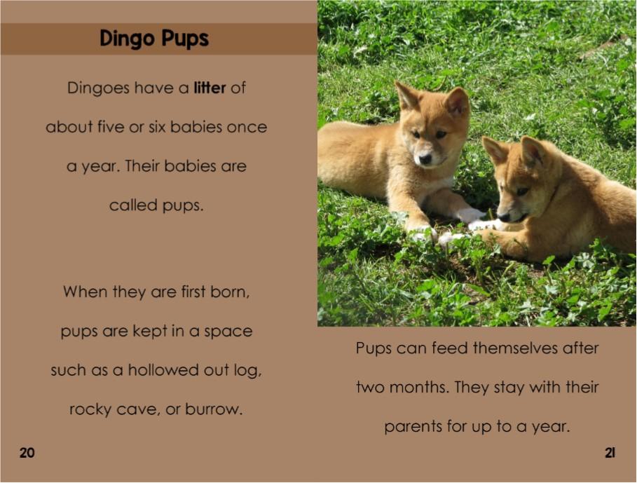Dingoesinterior