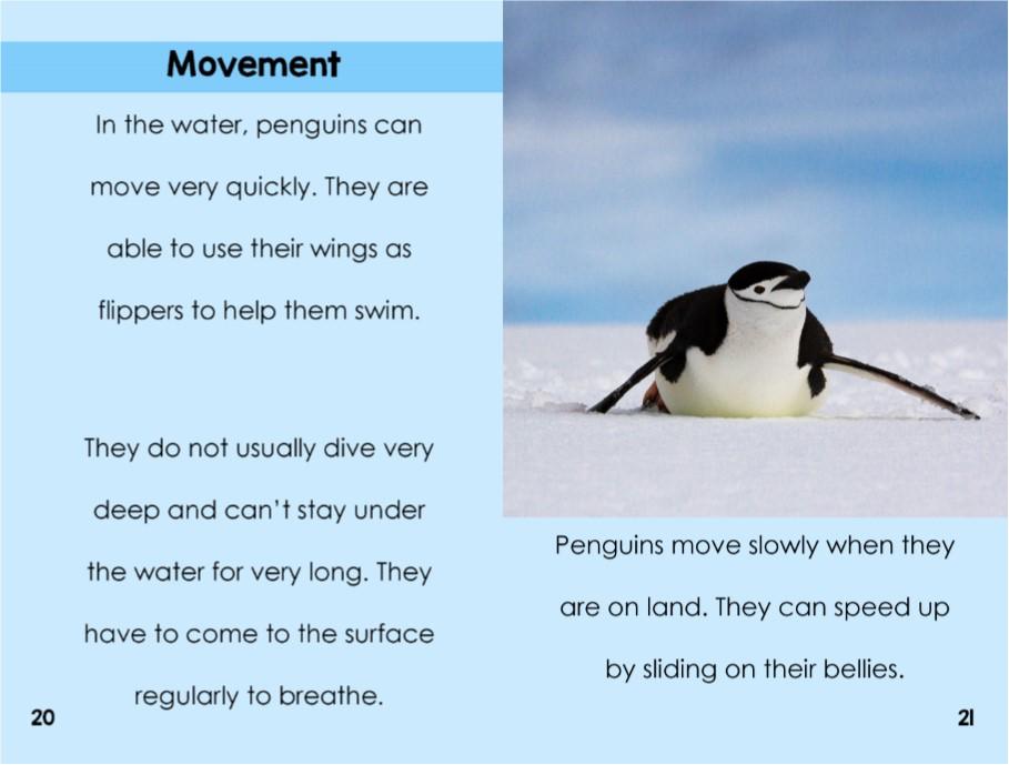 penguinsinterior