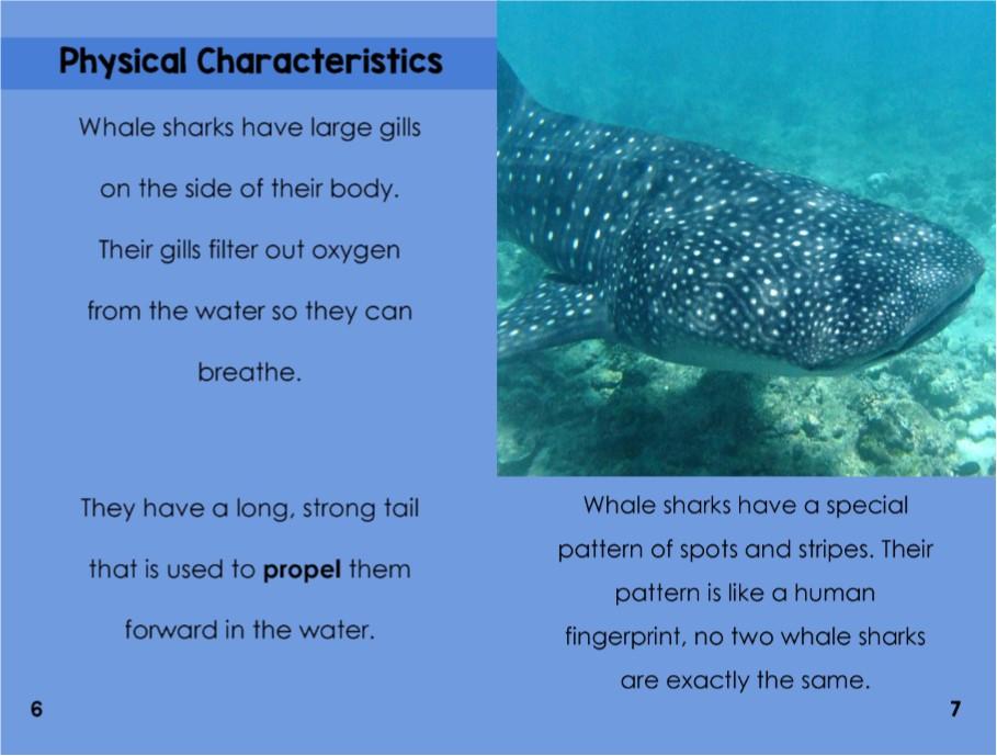 WhaleSharksinterior