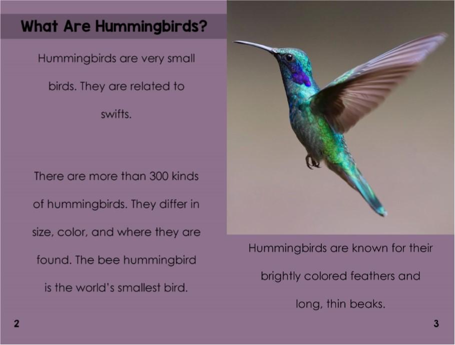 Hummingbirdsinterior