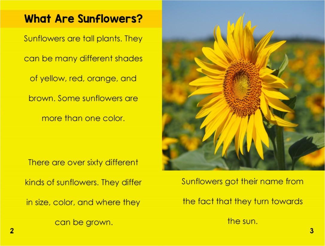 Sunflowersinterior