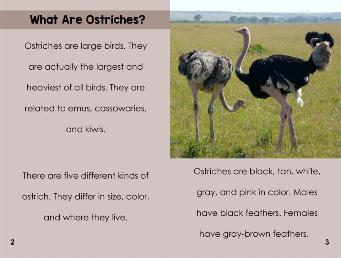 Ostrichesinterior