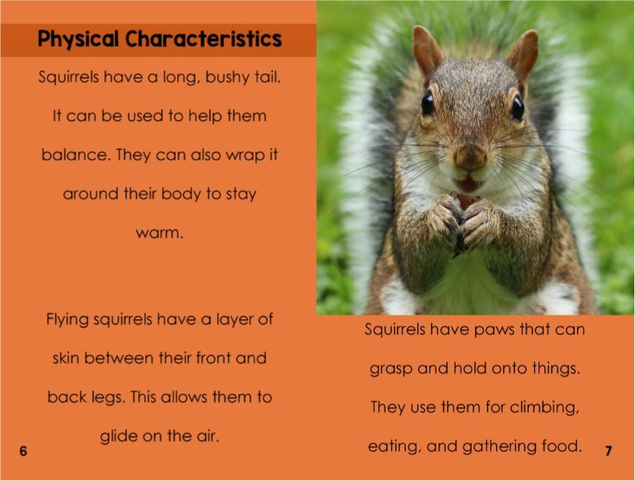squirrelsinterior