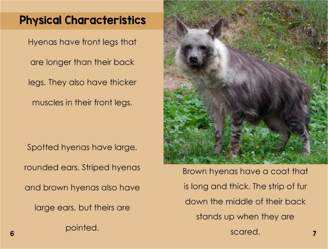 Hyenasinterior